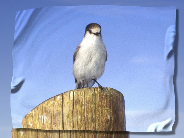 fbird-50109_1280