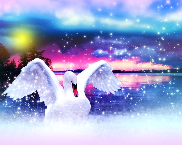 swan-653869_640